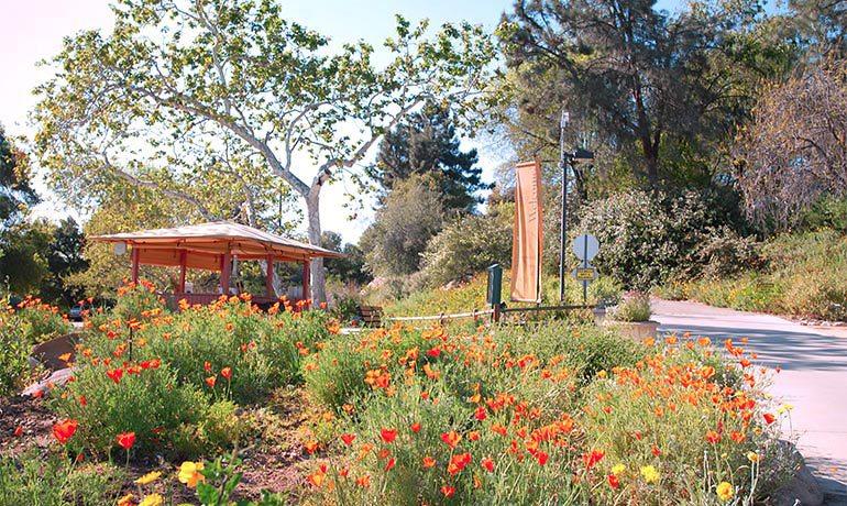 Botanic-Gardens_edit
